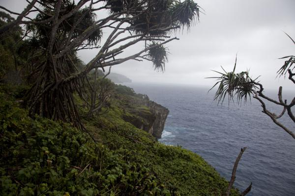 Foto de Trees above the steep cliffs on the eastern coast of 'Eua island'Eua island - Tonga