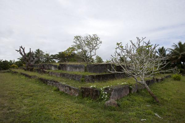 Picture of Lapaha Langi (Tonga): The Langi Namoala with a frangipane tree