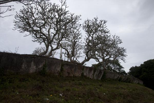 Picture of Lapaha Langi (Tonga): Trees growing on top of a langi in Lapaha