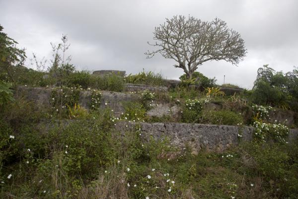 Picture of Lapaha Langi (Tonga): One of the many langi in Lapaha with frangipane tree on top