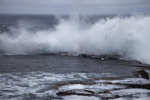 Picture of Wave crashing on the coral shore of Tongatapu
