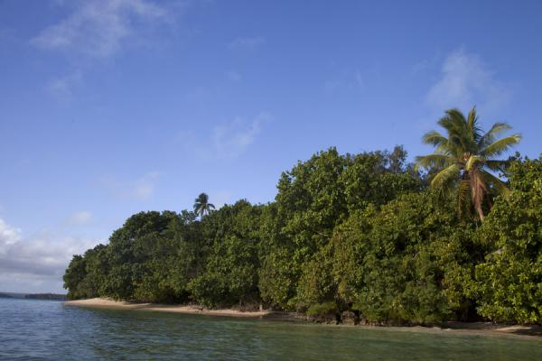 Picture of Ofu island (Tonga): Trees and small beach on the southeastern point of Ofu island