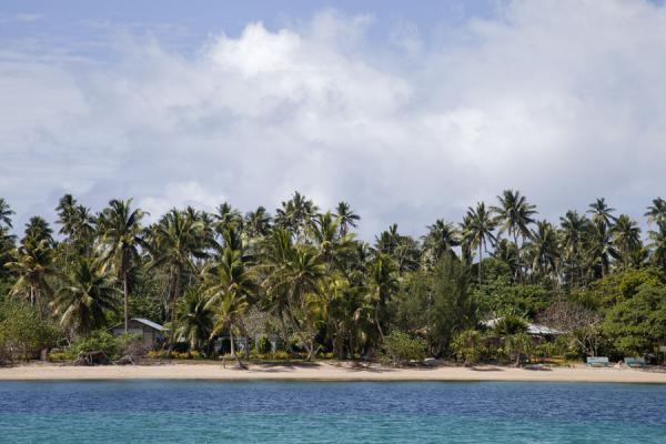 Picture of Ofu island (Tonga): Tall palm trees rising from the white beach of Ofu island