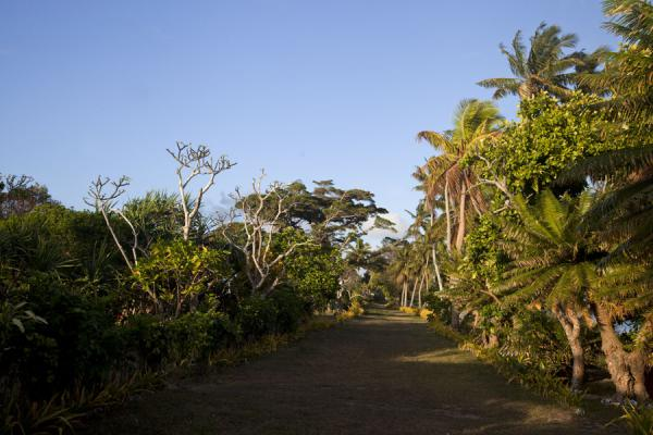 Picture of Ofu island (Tonga): Main street of Ofu island village