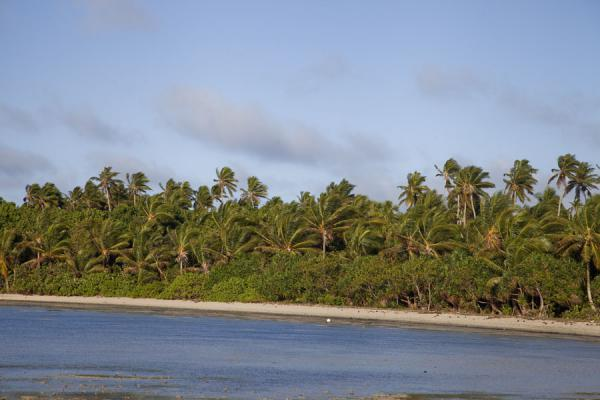 Picture of Ofu island (Tonga): White beach with trees at Ofu island