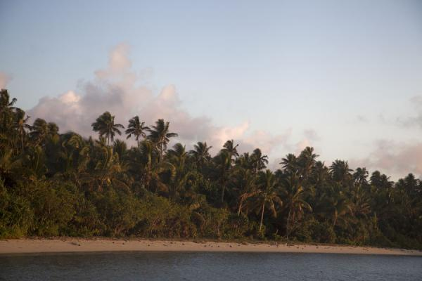 Picture of Ofu island (Tonga): Sunrise on the palmtrees of one of the large beaches on the eastern side of Ofu island