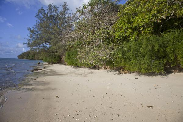 Picture of Ofu island (Tonga): One of the many small beaches of Ofu island