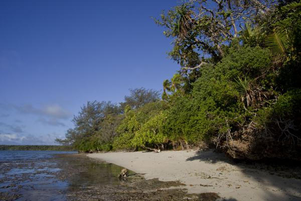 Picture of Ofu island (Tonga): Beach at the northern tip of Ofu island