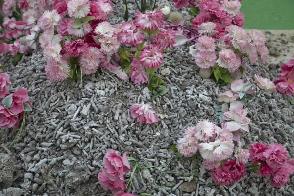 Picture of Tongan cemeteries (Tonga): Coral covering a grave with fake pink flowers