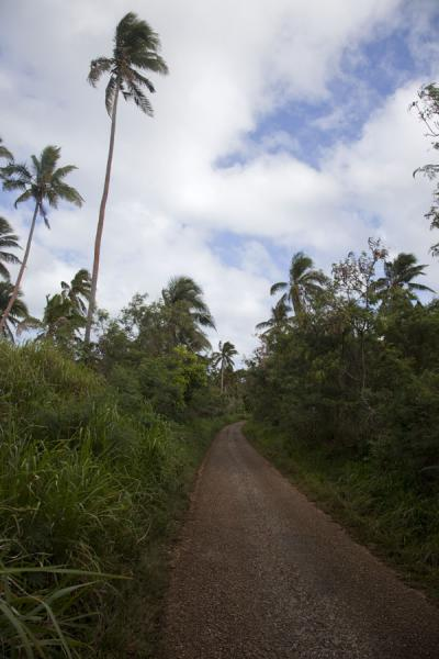 Picture of Vava'u Island (Tonga): Palm trees surrounding one of the roads over Vava'u