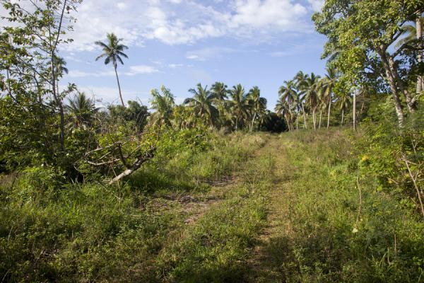 Picture of Vava'u Island (Tonga): Overgrown dirt track near Ano lagoon