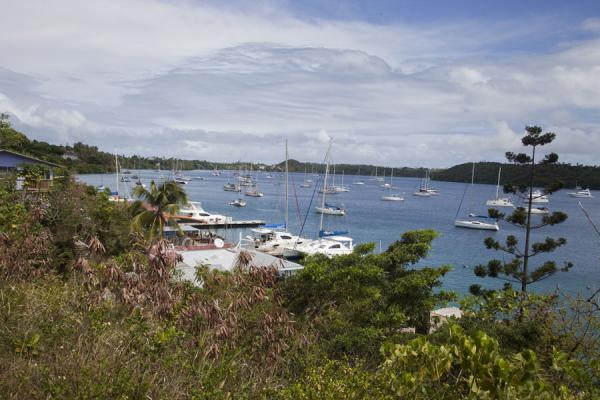 Foto van View of Vava'u harbour full of yachtsVava'u Island - Tonga