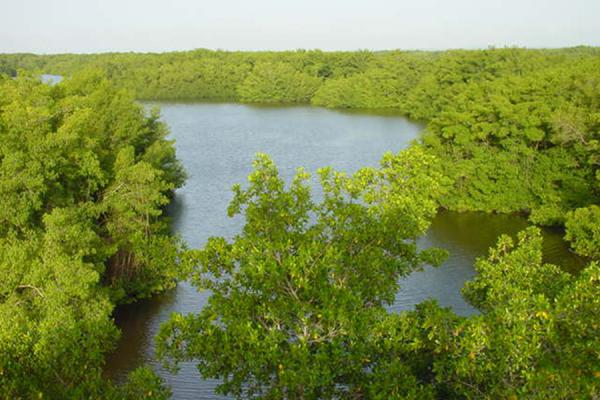 Picture of Caroni Bird Sanctuary (Trinidad & Tobago): Caroni swamp landscape, Trinidad