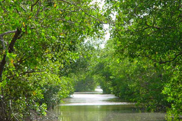 Picture of Caroni Bird Sanctuary (Trinidad & Tobago): Canal of Caroni, Trinidad