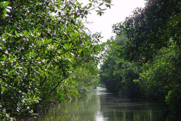Another canal | Caroni Bird Sanctuary | Trinidad & Tobago
