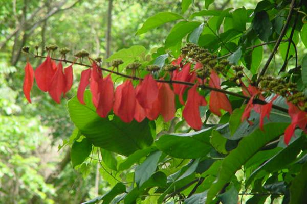 One of the colourful trees of the forest | Paria Bay | Trinidad & Tobago