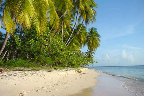 Foto van Trinidad & Tobago (Sand, sea, sun and palm trees at Pigeon Point Beach)