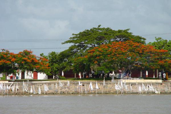 Cremation under typical trees | Trinidad | Trinidad & Tobago
