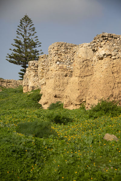 The wall built by the Romans superseding the Punic quarter | Punic Carthage | Tunisia