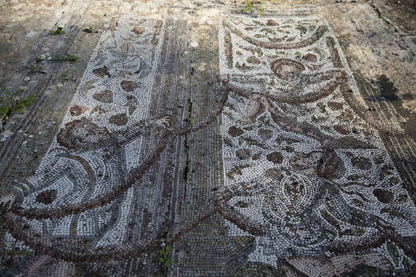 Mosaics found in one of the Roman villas of Carthage | Roman Carthage | 突尼西亚