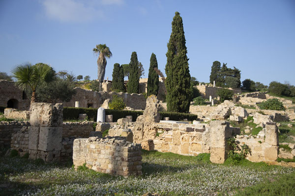 Foto de Túnez (The Roman villas of Carthage with pine trees)