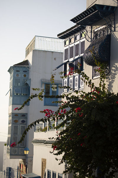 Flowers and walls with balconies in Sidi Bou Said - 突尼西亚