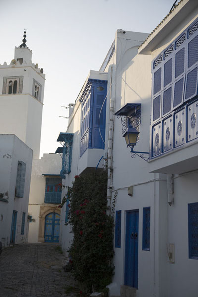 Side street of Sidi Bou Said with whitewashed houses, blue balconies and doors | Sidi Bou Said | Tunisia