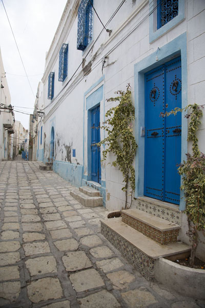 Street with whitewashed houses and blue doors and windows in Sousse | Sousse medina | Tunisie