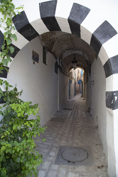 Black-and-white painted arch with cobblestone street in the old medina of Tunis | Túnez medina | Túnez