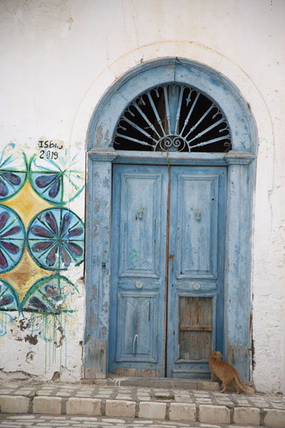 Picture of Tunisian doors (Tunisia): Cat entering a wooden blue door in Sousse