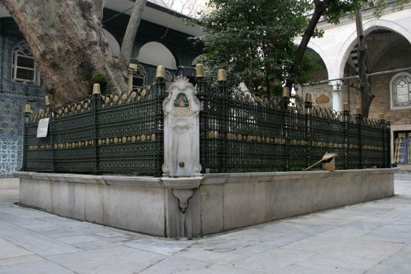 Foto van The giant tree surrounded by a fence in the courtyard of the mosque of EyüpMoskee Sultan Eyüp - Turkije