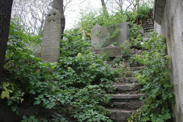 Foto van Stairs and tombs covered by plants in the cemetery of EyüpMoskee Sultan Eyüp - Turkije