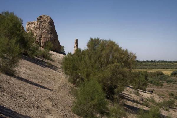 Foto di Trees growing near the city wall of IzmukshirDashoguz - Turkmenistan