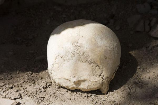 Foto di Skull in the defensive walls of IzmukshirDashoguz - Turkmenistan