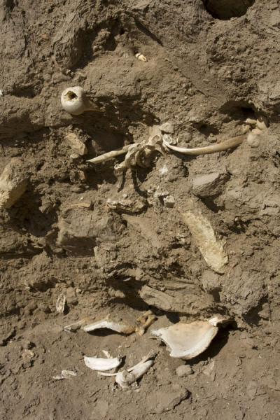 Picture of Konye-Urgench (Turkmenistan): Human bones in a hill of Konye-Urgench