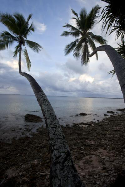 Picture of Fongafale islet (Tuvalu): Wind-shaped palm trees hanging over the calm waters of the Funafuti lagoon