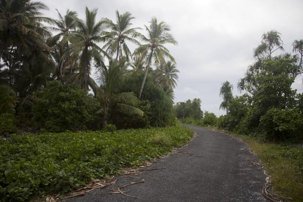 Picture of Fongafale islet (Tuvalu): The road of Fongafale
