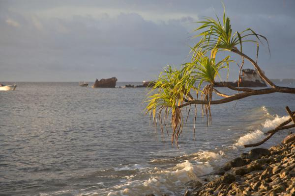 Foto van Tree with wreck of a Japanese fishing boat just north of the wharfFongafale - Tuvalu