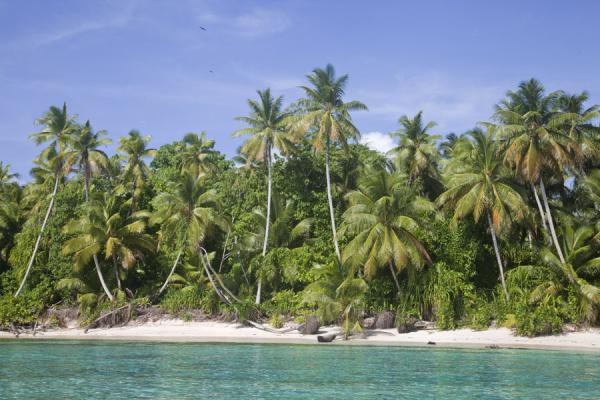 Palm trees towering above the white beach of Tepuka islet | Tepuka islet | Tuvalu