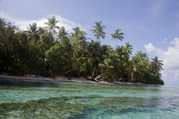 Foto de Coral on the sandy seabed with palm tree studded Tepuka islandTepuka - Tuvalu