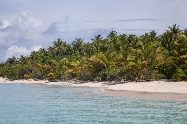 White sand beach topped by green palm trees at Tepuka islet | Tepuka islet | Tuvalu