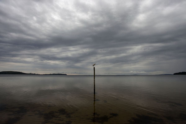 Picture of Buggala Ssese Island (Uganda): Bird on a pole in Lake Victoria under a cloudy sky