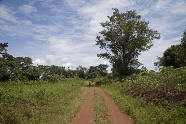 One of the roads on Buggala Island | Buggala Ssese Island | Uganda