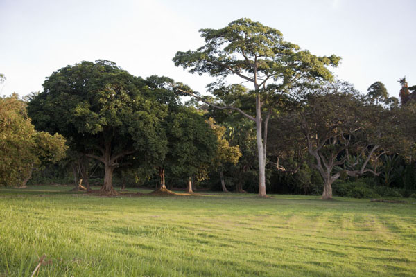 Open space surrounded by trees in the botanical garden | Botanical Gardens Entebbe | Uganda