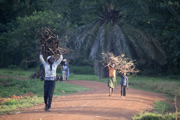 People walk through the botanical gardens with their load of branches | Botanical Gardens Entebbe | Uganda