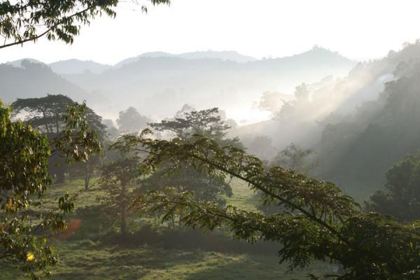Sunrays and morning fog making the trees float in the valley | Uganda Light | Uganda