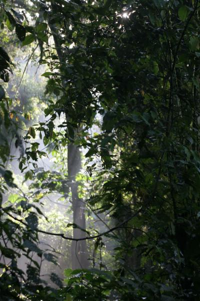 Sunlight seeping through the thick vegetation of Bwindi Impenetrable Forest | Uganda Light | Uganda