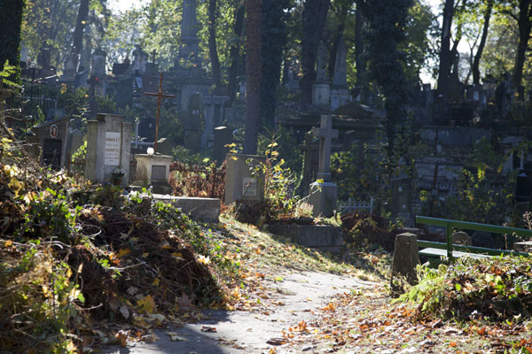 Foto van Light filtering through the trees and falling on an old section of Lychakiv cemeteryDili - Oekraïne