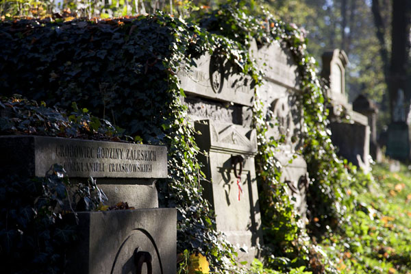 Row of old tombs overgrown with plants at Lychakiv cemetery | Lychakiv cemetery | Ukraine