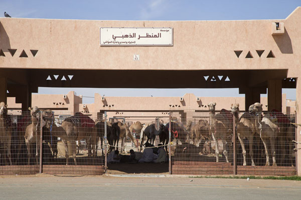 Photo de One of the many stalls with camelsAl Ain - Emirats Arabes Unis